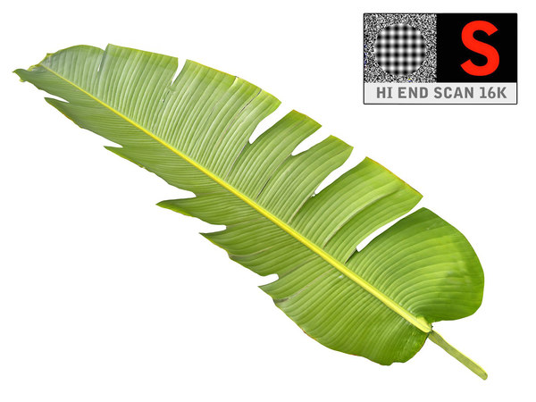 tropical leaf 3D model
