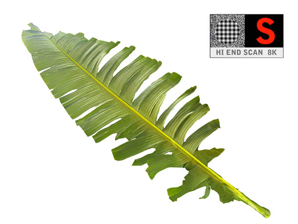 tropical leaf model