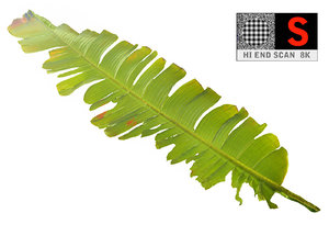 leaf ready 3D model