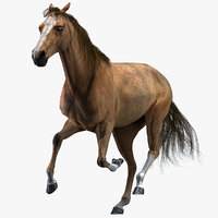 3D realistic horse animation model