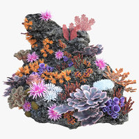 coral reef_n_01
