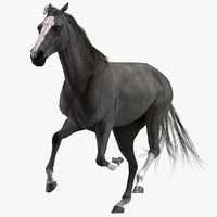 Horse (Black) (Animated)