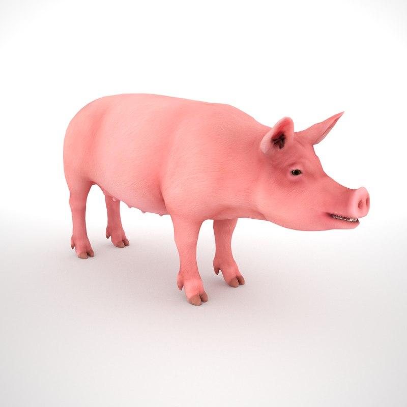 female pig 3D
