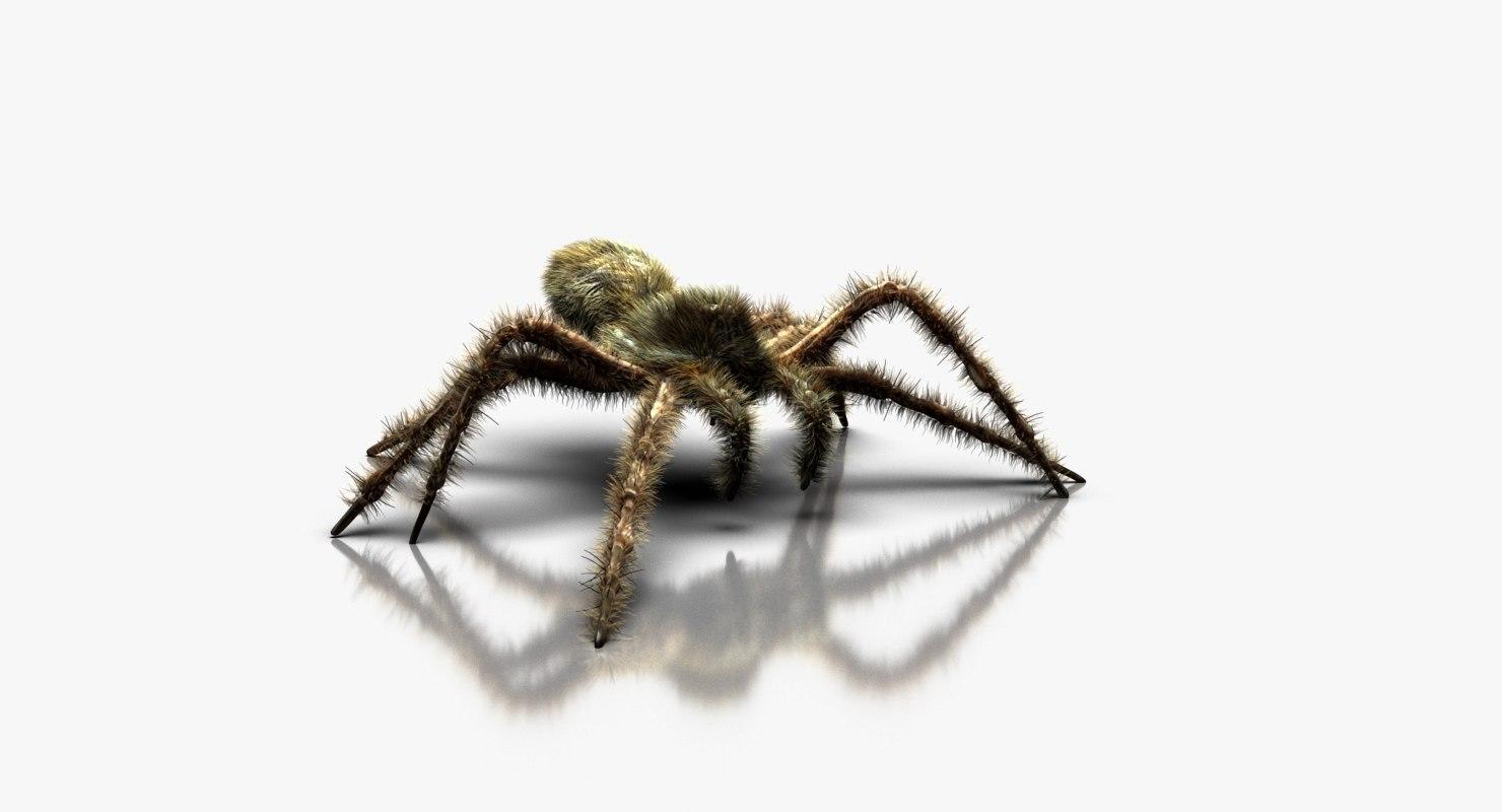 3D model wolf spider