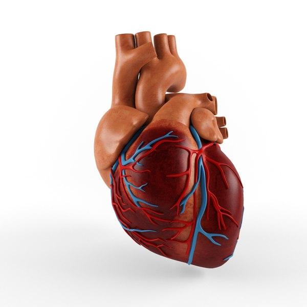 3D heart video