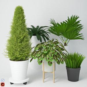 houseplant 9 3D model