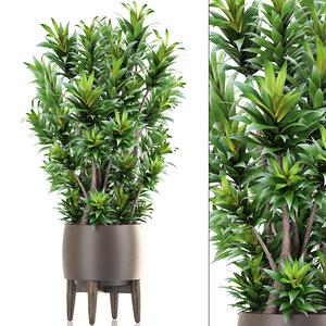 dracaena tree 3D
