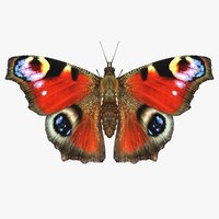 3D realistic peacock butterfly model