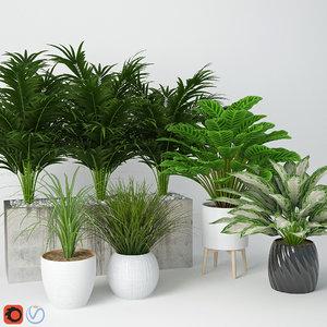 houseplant 11 3D