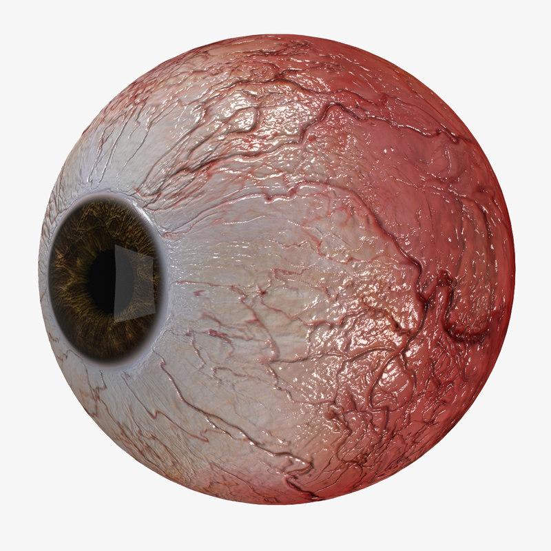 3D eye cornea eyeball model
