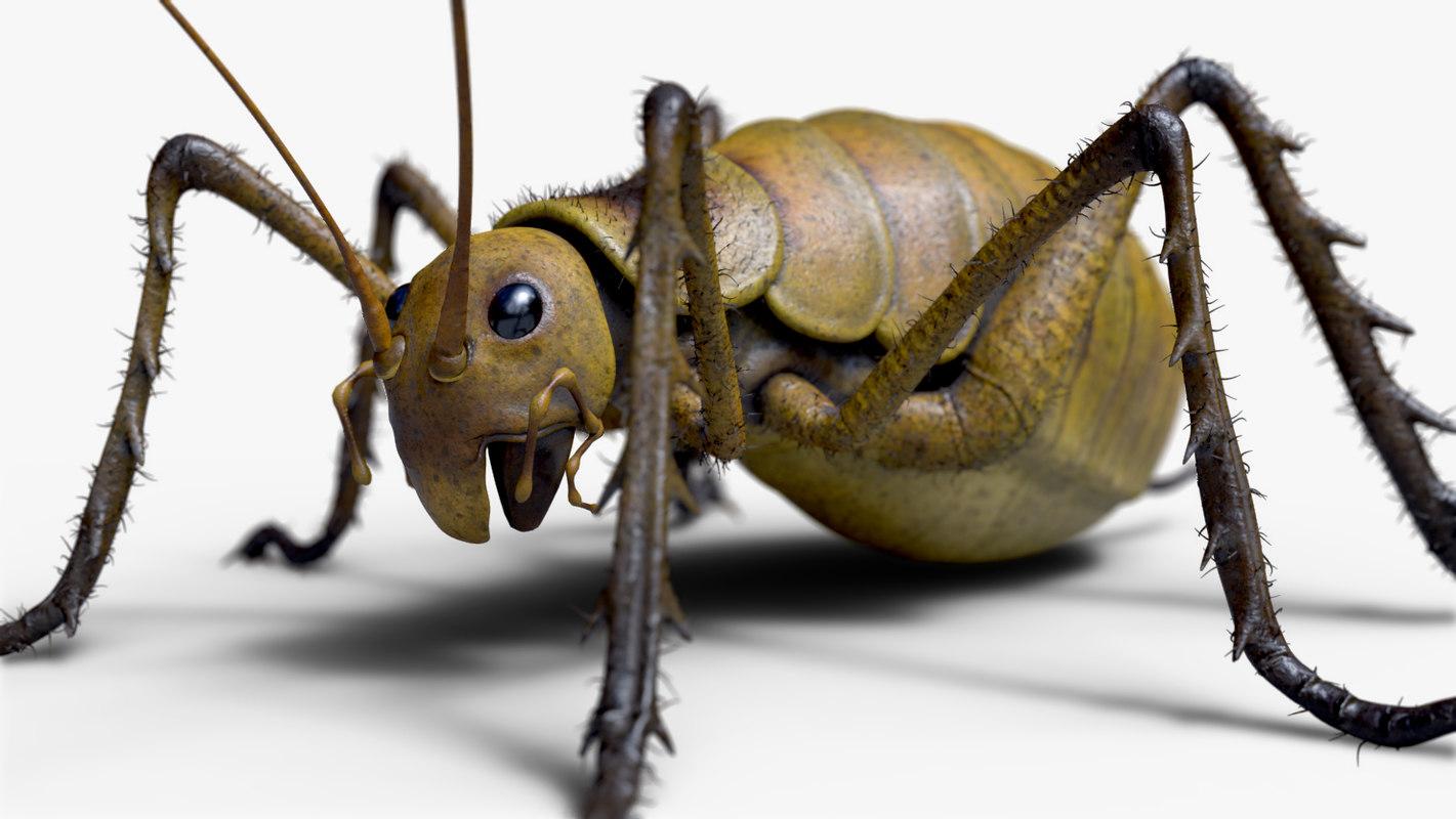 wetapunga giant weta cricket 3D model