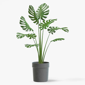 3D monstera plant pot model