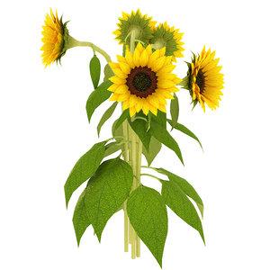 3D sunflower sun flower