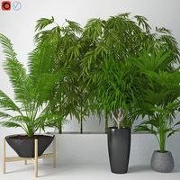 3D houseplant 12