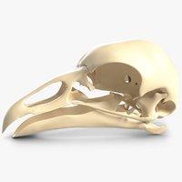 3D bird skull model