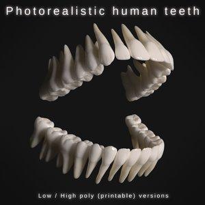 human teeth model