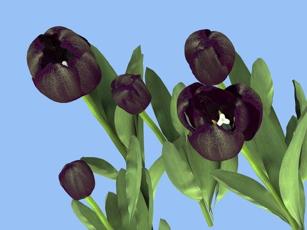 3D 5 tulips black model