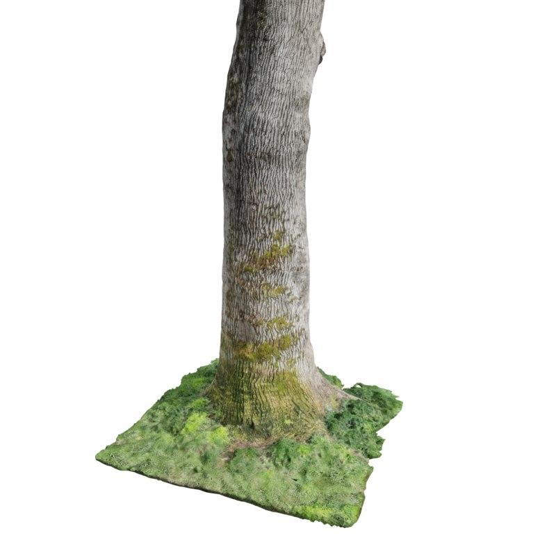 3D model photogrammetry oak tree