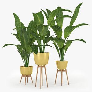 3D palm banana