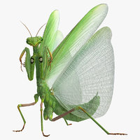 European Mantis Rigged with Fur