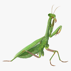 european mantis rigged animate 3D model