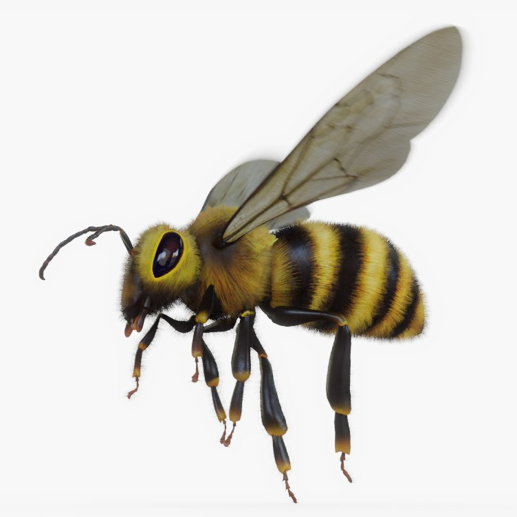 rigged bee 3D