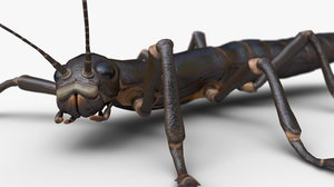 3D ready stick insect model
