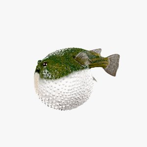 3D animals fish