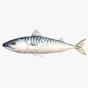 3D blue mackerel model