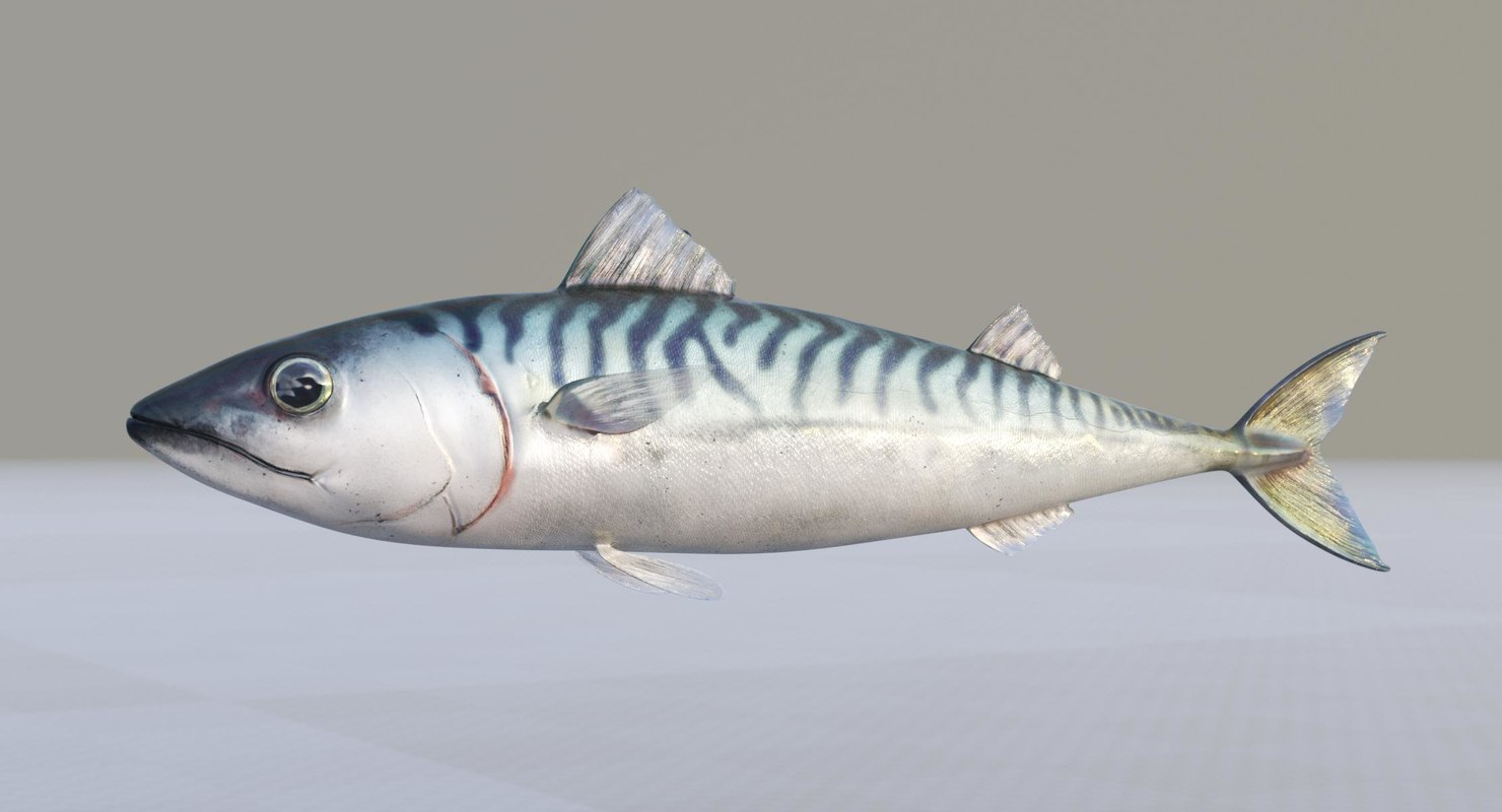3D blue mackerel model