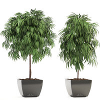 3D pot ficus alii model