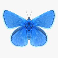 3D model realistic common blue butterfly