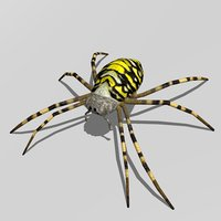 3D wasp spider