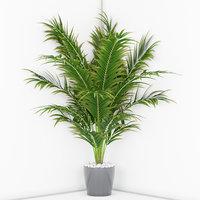 3D houseplant 16