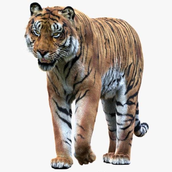 3D tiger rigged fur 1