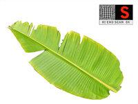 3D leaf ready model