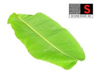 3D leaf ready