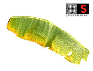 leaf ready model