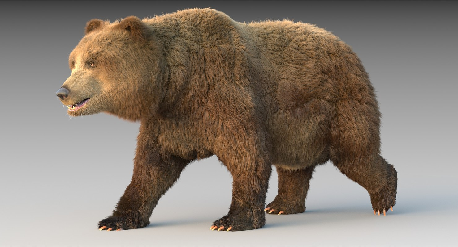 3D grizzly bear fur rig