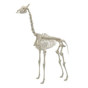 giraffe skeleton 3D