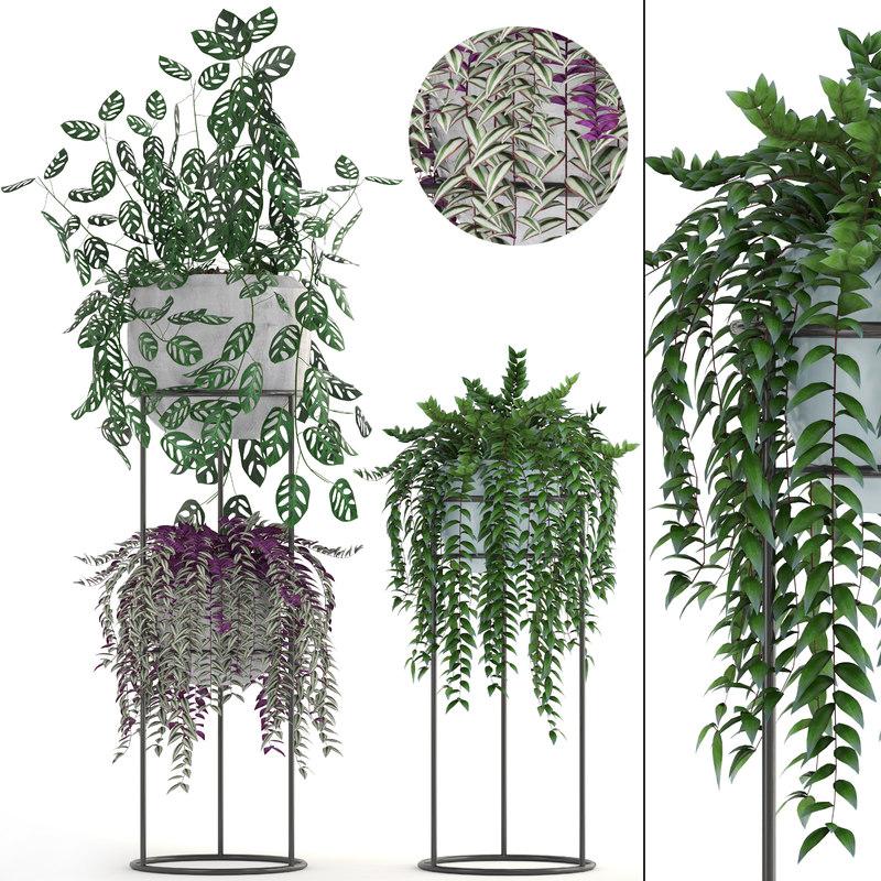 3D plants tradescantia zebrina