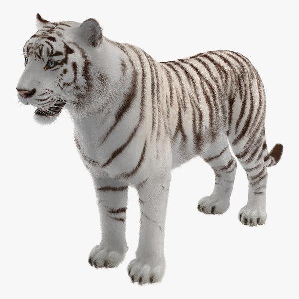 white tiger fur 3D model