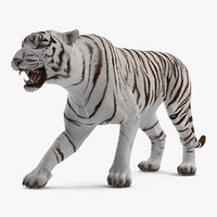 white tiger roar model