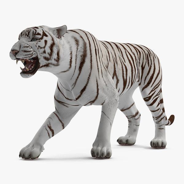 white tiger roar model