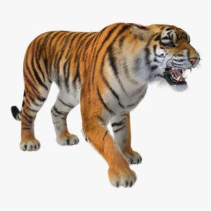 tiger roar fur 3D model