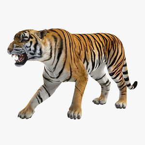 3D model tiger roar