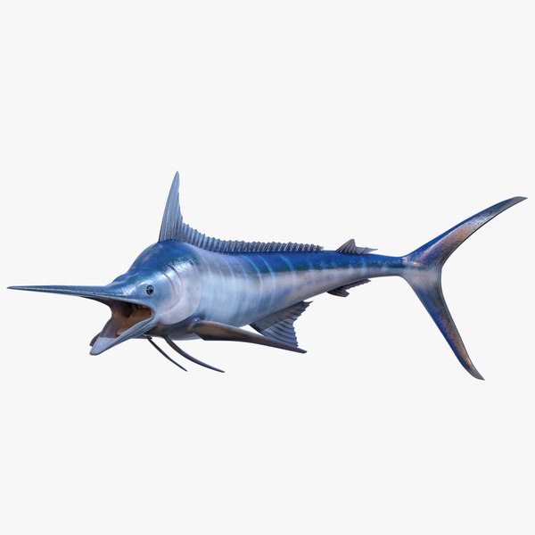 3D rigged blue marlin model