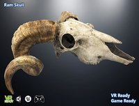 optimized ram skull 3D