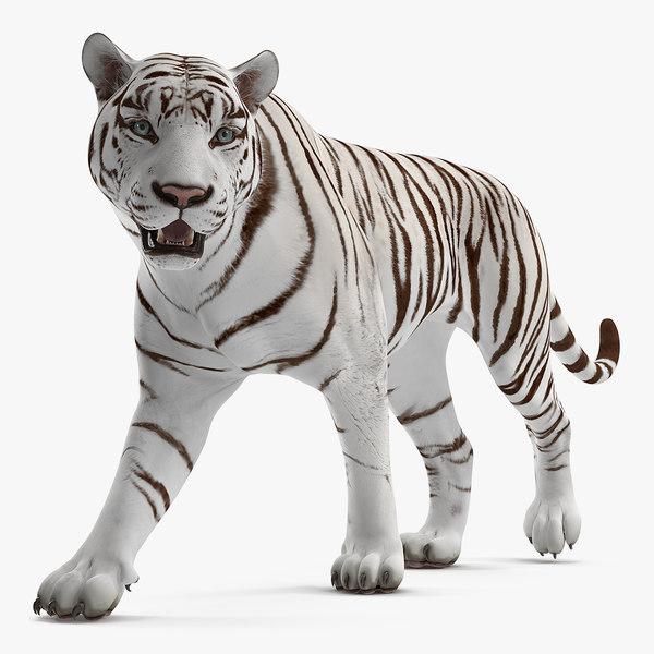 3D white tiger walkig pose model