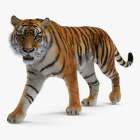tiger walkig pose fur 3D model